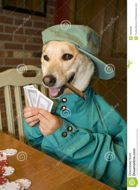 dog playing poker stock photo image