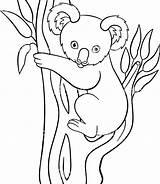 Koala Coloring Pages Simple Cartoon Drawing Goomba Bear Mario Printable Moose Animal Getdrawings Animals Getcolorings Colorings Colori sketch template