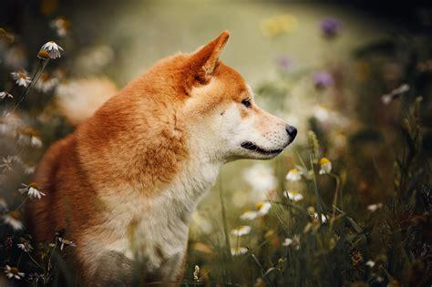 euer lieblingsbild des tages seite  der hund