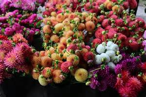 Floret Flower Farm Dahlias