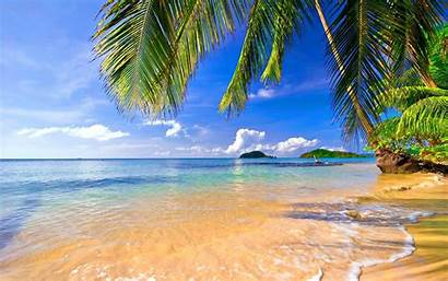 Palm Tropical Trees Beach Landscape Coconut Water