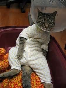 the cats pajamas these 30 pets in pajamas will make you so tired and happy