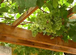 Pergola Mit Wein Bepflanzen : pergola am haus selbst bauen und begr nen ~ Eleganceandgraceweddings.com Haus und Dekorationen