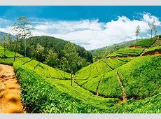 Circuit au Sri Lanka Sri Lanka, l'île aux Joyaux 11