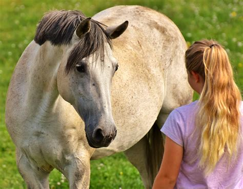 horses human emotional humans read non expressions biology animals study emotion facial according emotions memory sci remember domestic identify moment