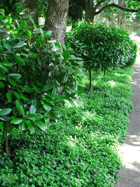 groundcovers images  pinterest garden ideas landscaping  shade garden