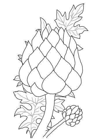 Coloring Picture by Artichoke Coloring Page Free Printable Coloring Pages