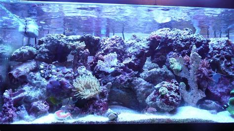 reef aquascaping ideas 12 best aquascaping ideas images on fish tanks