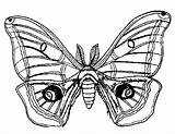 Moth Coloring Pages Drawing Luna Adult Getdrawings sketch template
