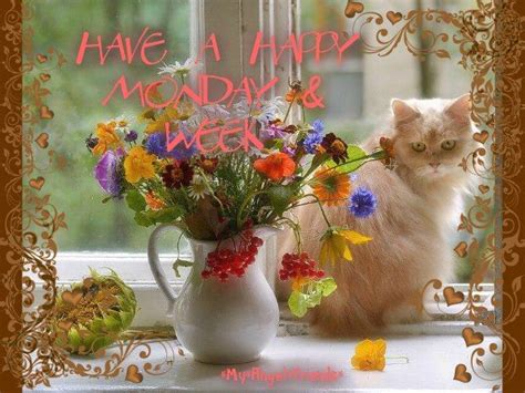 happy monday  week pictures   images