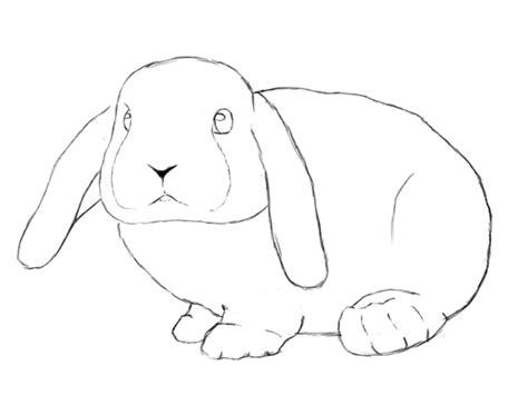 bunny drawings   fun