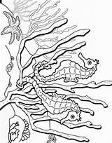Seahorse Coloring Sea Horse Printable Fish Coloring2print sketch template