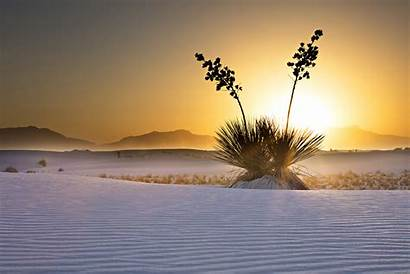Sands Monument National Plants Yucca Facts Cool