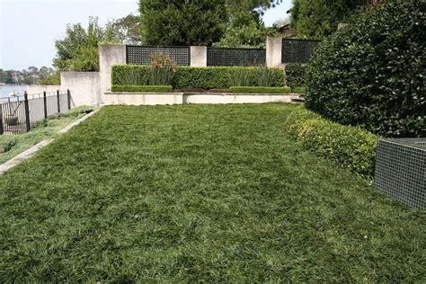 Mini Mondo Grass Mown As A Lawn. Must Have Cost A Fortune