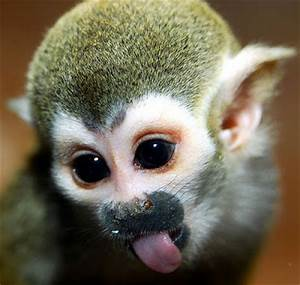 Cute and Funny Spider Monkeys   Funny And Cute Animals