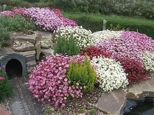 Blumen Für Steingarten : winzige alpine pflanzen f r steingarten tipps zur auswahl pflege ~ Markanthonyermac.com Haus und Dekorationen