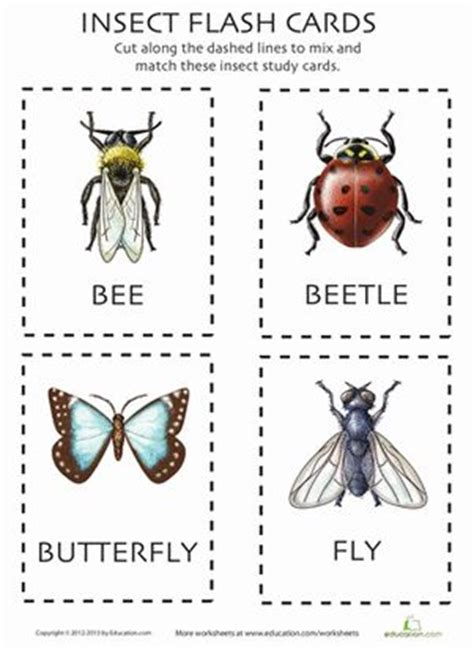 insect flashcards insect activities study cards insects