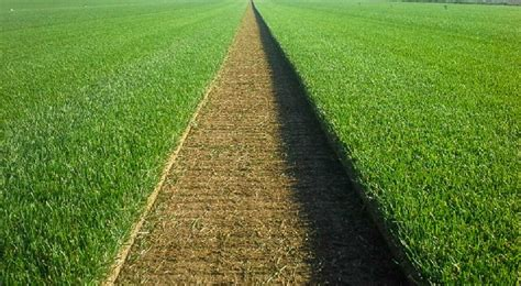Lawn Turf, Roll Out Lawn Suppliers
