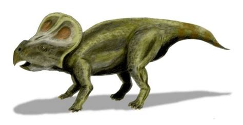 Nest Of Juvenile Protoceratops Andrewsi Dinosaurs Discovered