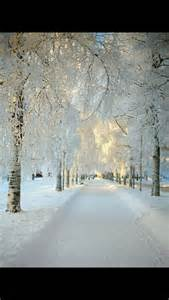 Beautiful Winter Snow Landscape