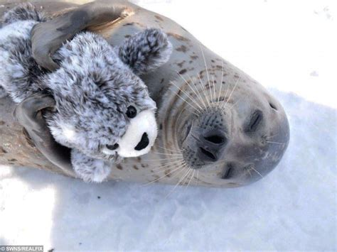 seal cuddling toy aww stuffed mini besotted animals spends fix