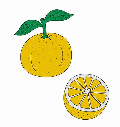 Svg Citrus Heraldry Wikimedia Archivo Commons Wikipedia