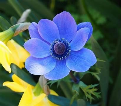International Emfd Important Floral Marsh Elizabeth