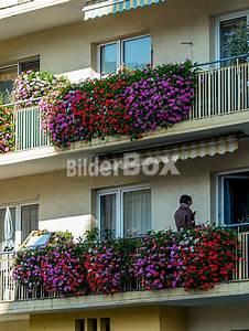 Blumen Für Den Balkon : balkon mit blumen bilderbox bildagentur gmbh ~ Lizthompson.info Haus und Dekorationen