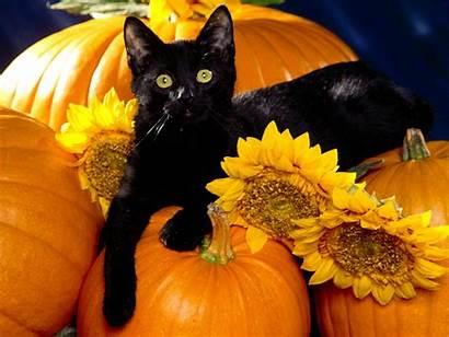 Halloween Desktop Pets Playful Wallpapersafari