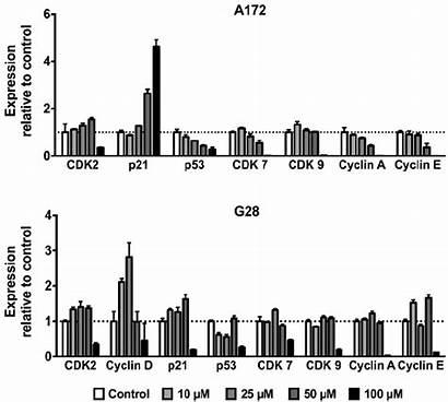 Expression Gene Relative G28 A172 Roscovitine Treated