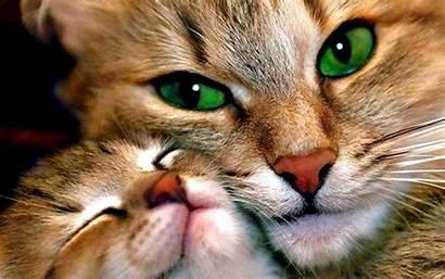 Mother Cat Child Animal Wallpapers Desktop Backgrounds