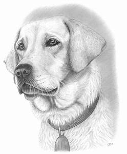 25+ best ideas about Dog Drawings on Pinterest | How to ...