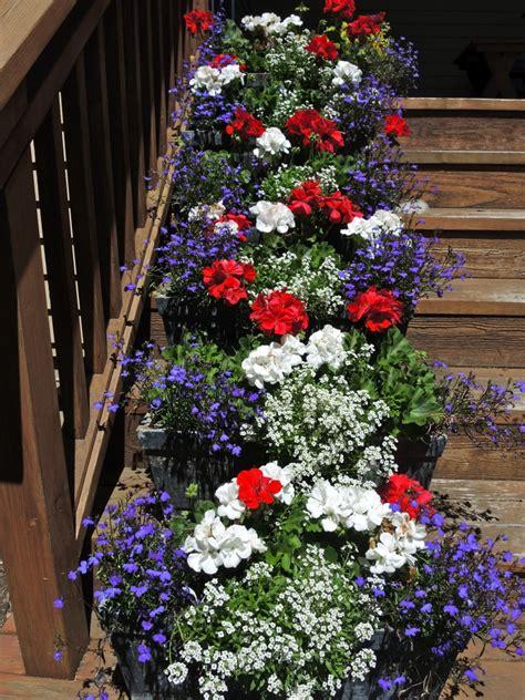 hooray   red white  blue patriotic plants