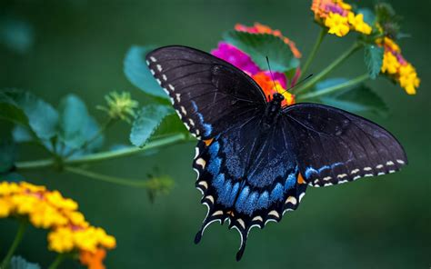 Wonderful Butterfly Macro Photo Hd Wallpaper