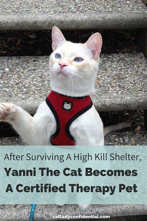 After Surviving A High Kill  Ee  Shelter Ee   Yanni The Cat Becomes