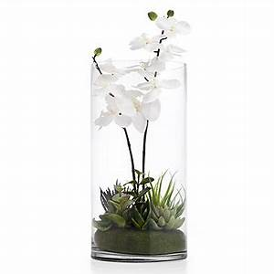Orchid With Succulents In Vase Coastal Collections Z