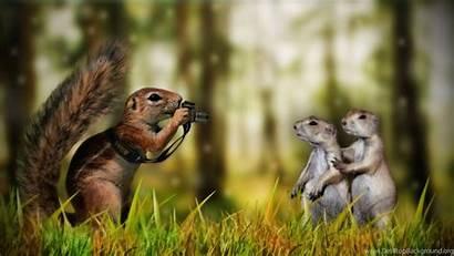 Funny Animals Wallpapers Desktop Background