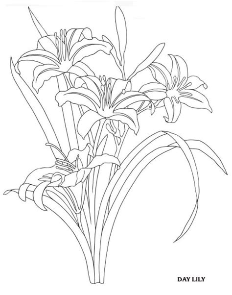 DAY LILY - Creative Haven Garden Flowers Draw and Color, Dover Publications | Day lilies, Flower