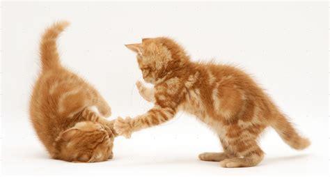 kater gedrag