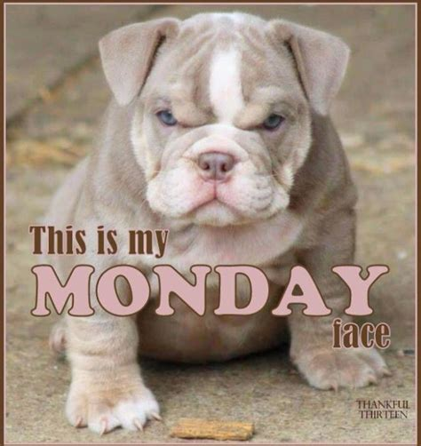 Monday Dog Meme - 17 best images about monday friday on pinterest friday funny pictures monday morning and smileys