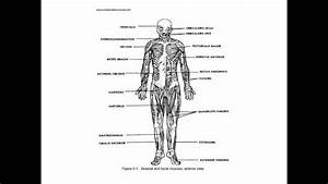Anatomy And Physiology Study Guide - Quizzes