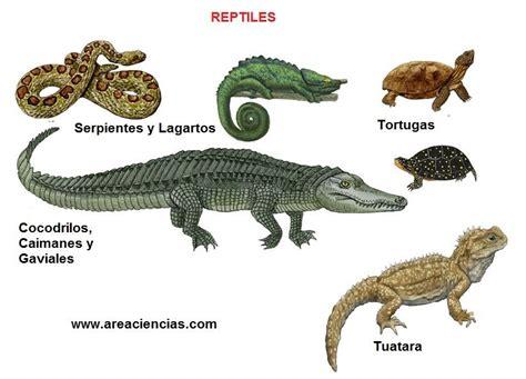 El reino Animal: Reptiles