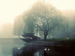 Image result for pictures of weeping willow tree's buds in spring fog