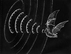 Bats; hunters that see in sound - 42