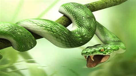 green snake hd wallpaper gallery
