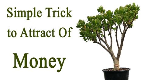 Money Plant Bedroom Feng Shui