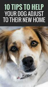 best 25 pet tips ideas on pinterest With adopting a dog tips