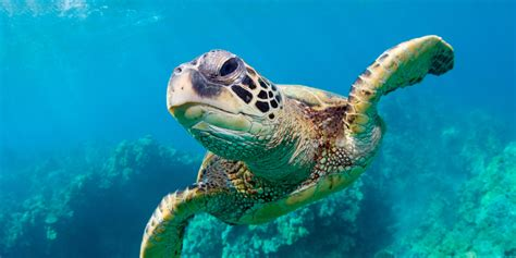 Images Of Turtles Witnessing Majesty With Dopey Lovesick Sea Turtles