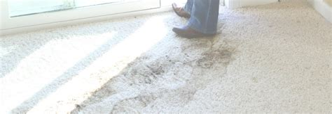Denver Carpet Cleaning & More With Green Products Stone Carpet Keady Removing Mold Stains From Jute Underlayment How To Get Animal Vomit Stain Out Of Oscars 2018 Red Watch Live Imperial Cleaning Philadelphia Adelaide Samples For Free Canada