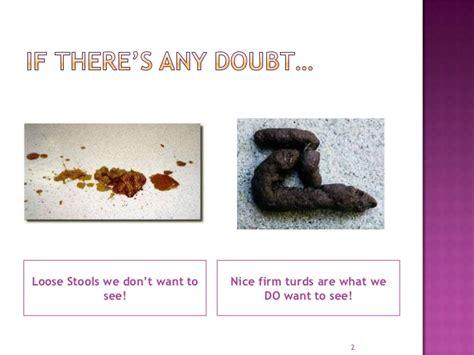 Stools Poop